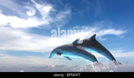 Couple of dolphins jumping, on a blue sky background. - Stock Photo