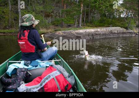 Girl handling a Northern Pike, Esox lucius, caught in the lake Vansjø, Østfold fylke, Norway. - Stock Photo