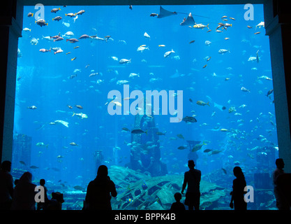 Aquarium in the Atlantis Hotel, Palm Jumeirah, Dubai, United Arab Emirates. - Stock Photo