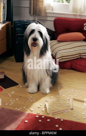 SHEEPDOG THE SHAGGY DOG (2006) - Stock Photo