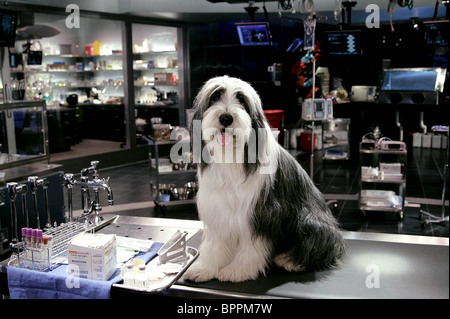 SHEEPDOG THE SHAGGY DOG (2006) - Stock Photo