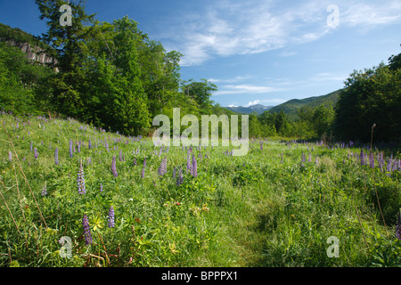Crawford Notch State Park during the spring months in the White Mountains, New Hampshire USA - Stock Photo