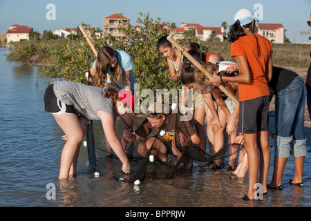 Middle school girls view saltwater specimens collected in seine net during marine biology class field trip to Corpus - Stock Photo