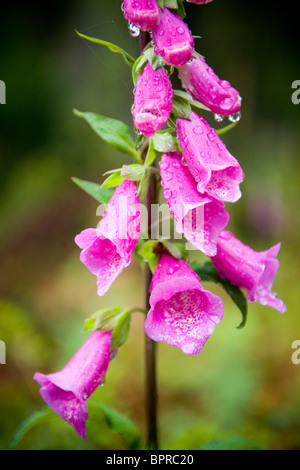 Bright purple and pink flower in lush forest - Stock Photo