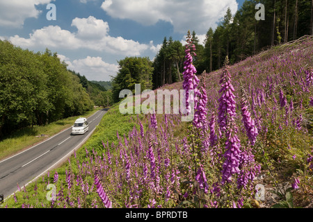 CAMPER VAN ON ROAD IN FOREST OF DEAN WITH FOXGLOVES IN FOREGROUND - Stock Photo
