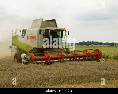 Claas Lexion 480 combine harvester harvesting wheat in a Norfolk field on a bright August day - Stock Photo