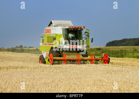 Claus Combine Harvester, Wheat harvesting, cereal harvest, agriculture, field, nature, crop, farm, rural, grain, - Stock Photo