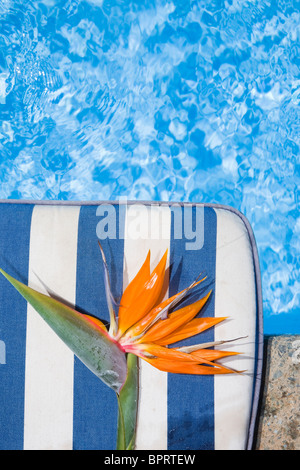 Strelitzia flower by a blue pool - Stock Photo
