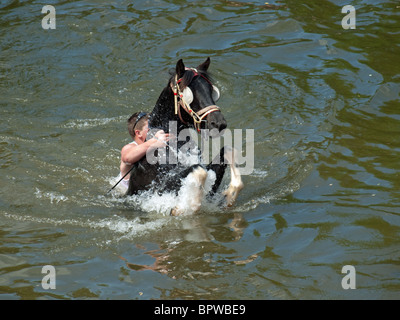 Rider hangs on as horse rears whilst swimming in River Eden at the famous annual travellers' gathering at Appleby - Stock Photo