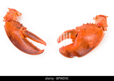 Lobster claw with white background - Stock Photo