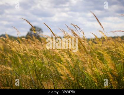 Wild grass field in late summer - Stock Photo