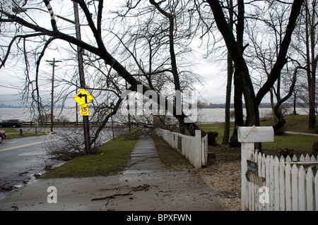 fallen tree arching across the sidewalk after a March storm in residential neighborhood - Stock Photo