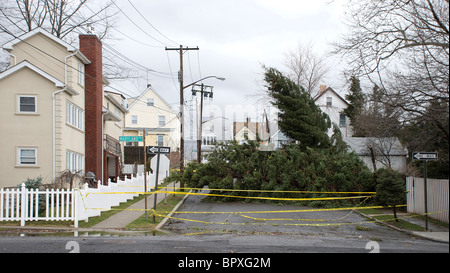 Fallen evergreen tree blocking road in residential neighborhood after winter wind and rain storm - Stock Photo