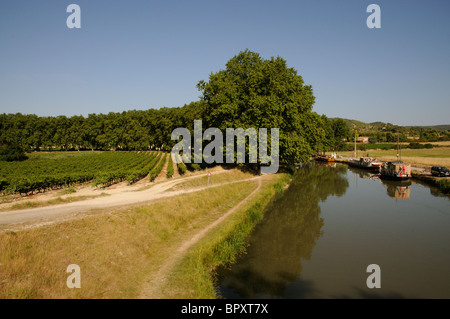 Vines grow close to the Canal du Midi at Argeliers in the languedoc Roussillon region of southern France - Stock Photo