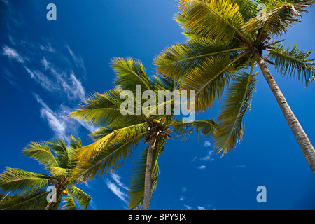 Creative abstract view of isolated Palm tree on a beach and blue sky in Saint Thomas Island, POV looking up, bright - Stock Photo