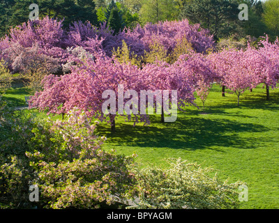 Cherry Esplanade At The Brooklyn Botanic Garden In Winter Brooklyn Stock Photo Royalty Free
