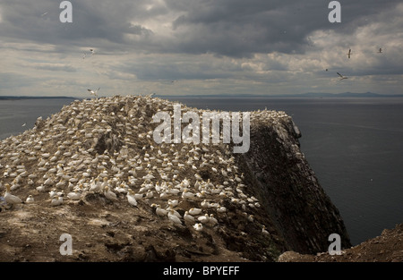 General view of Bass Rock, Scotland - Stock Photo