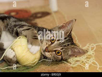 Cute Tabby cat kitten playing on the floor with a large yellow ball of wool and looking directly at the camera - Stock Photo