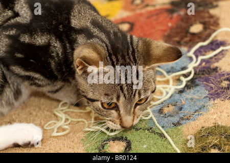 Cute little Mackerel Tabby kitten chewing on and playing with yellow wool - Stock Photo