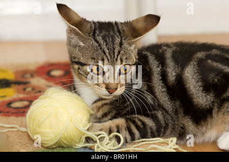 Cute Mackerel Tabby kitten ears flattened and playing on the floor with a large yellow ball of wool - Stock Photo