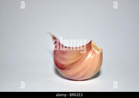 Garlic clove - Stock Photo