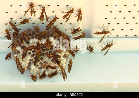 wasp larvae in nest stock photo  royalty free image nexton homes summerville sc nexton house for sale