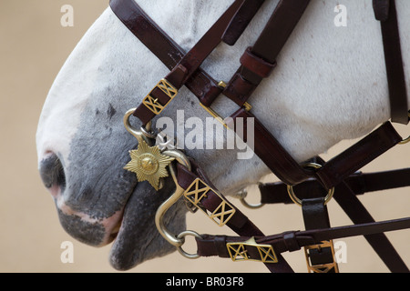 Close up of horse with English Bridle. 'Trooping the Colour' 2010 - Stock Photo