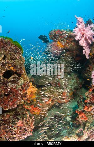 Scuba diving at Similan Islands Underwater Park, Thailand, SE Asia - Stock Photo