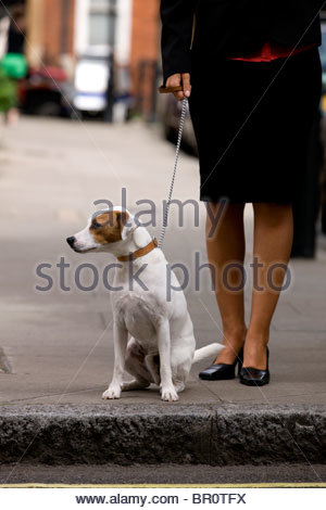 A businesswoman and her dog waiting to cross the road - Stock Photo