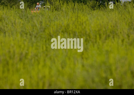 A man on a tractor harvests ragweed pollen at his fam in Sedalia, Missouri. - Stock Photo