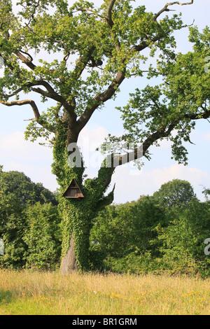 Owl box on tree in Cheshire, UK (used by tawny owls - Strix Aluco). - Stock Photo