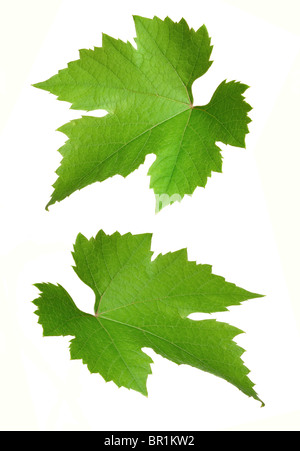 grapevine leaves - Stock Photo