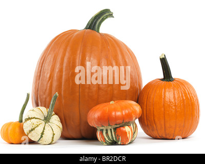 Pumpkins and gourds still life isolated on white background - Stock Photo