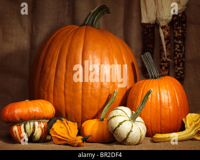 Pumpkins, gourds and indian corn artistic still life on burlap background - Stock Photo