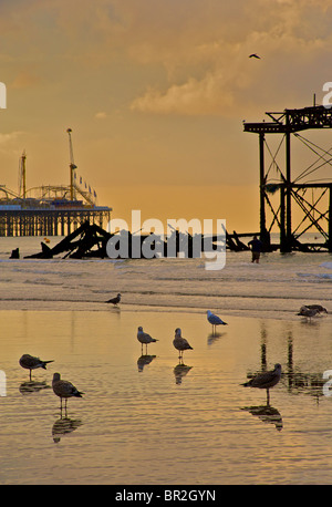 Silhouettes of seagulls and the dilapidated West Pier, Brighton. Low tide at sunrise. East Sussex, England - Stock Photo