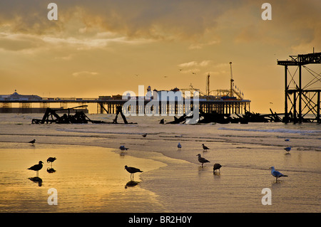 Silhouetted remnants of the West Pier with The Palace Pier beyond. Low tide. Brighton, East Sussex, England - Stock Photo