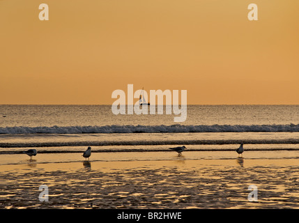 Sunset on Brighton beach lat low tide, Brighton & Hove, East Sussex, England - Stock Photo