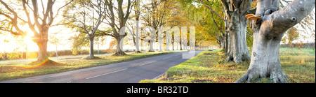 Beech tree avenue near Badbury Rings Dorset county England UK This photograph was taken 18th November 2006 - Stock Photo