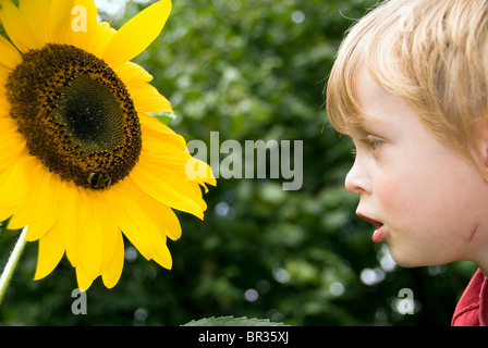 Portrait of Little Boy Looking at a Bee Collecting Pollen on a Giant Yellow Sunflower - Stock Photo