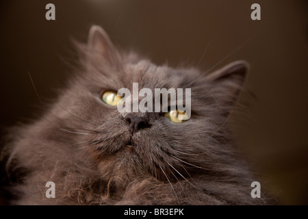 gatto cat - Stock Photo