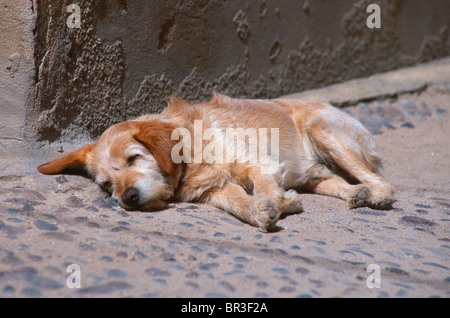 Sleeping dog. - Stock Photo