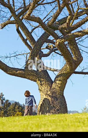White Silk floss tree with young boy admiring it. - Stock Photo