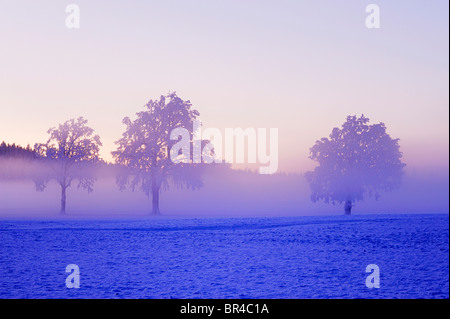 Winter landscape shrouded in fog, Horben, Aargau, Switzerland, Europe - Stock Photo