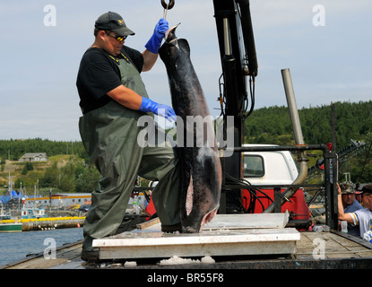 Un loading swordfish from the hannah boden fishing boat for Fishing shows on discovery channel