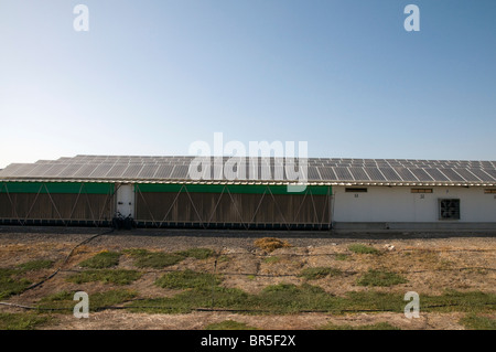 Electricity converting solar panels on a roof of a Turkey coop - Stock Photo