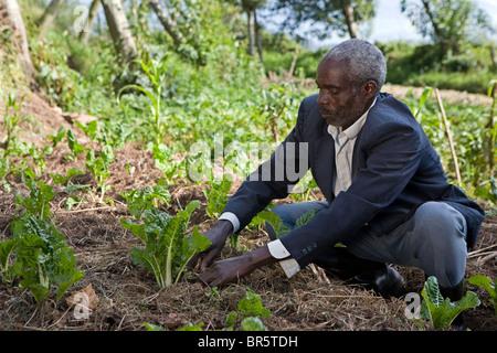 Erasmus Nsabimana during a week's residential training with Kulika in Uganda on sustainable organic farming. - Stock Photo