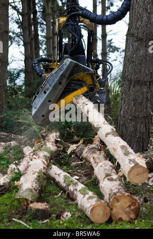 A John Deere Timberjack felling trees in sustainable woodland in Suffolk, UK. he machine chops down trees ready - Stock Photo