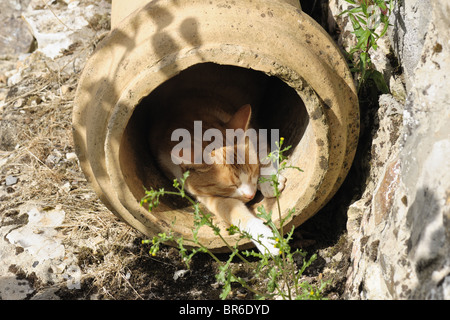 A ginger cat in a disused chimney pot resting in the sunshine - Stock Photo