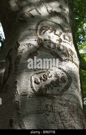 Initials carved into the smooth bark of a beech tree - Stock Photo