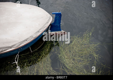 Boat and weed in harbour pier area in Lake Iseo, Iseo, northern Italy. - Stock Photo